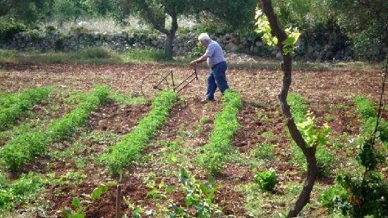 Tricase, إيطاليا: Masseria Uccio - Contadino (Farmer)