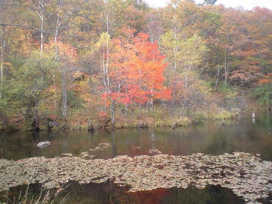 Sakuho-machi, Japón: 園内の遊亀湖畔の紅葉