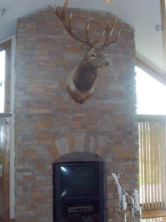 "Dockside Bed & Breakfast : this is why it is the ""elk suite"""