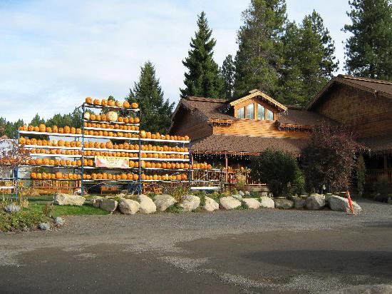 The Pancake House and Christmas Shop: Pumpkin Festival