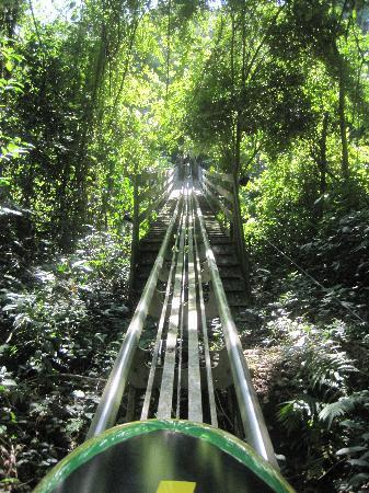 Rainforest Bobsled Jamaica at Mystic Mountain: Heading back to the top after an amazing ride!