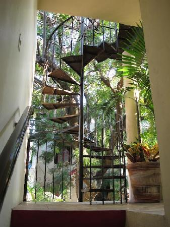 Hotel Casa Blanca: stairs to rooftop patio