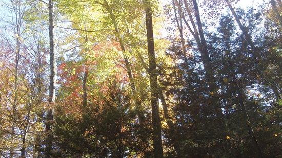Zip Gatlinburg: Fall colors
