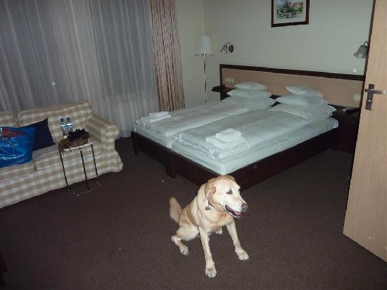 ‪هوتل أمبر: Our room and our dog‬