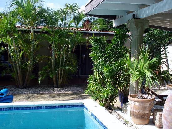 Bananas Apartments: pool
