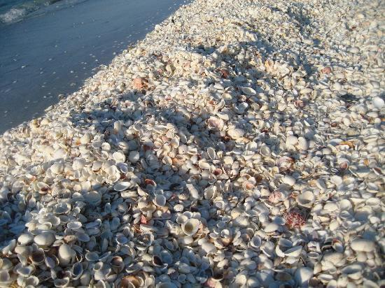 Tarpon Beach Condos: Shells right outside our Condo