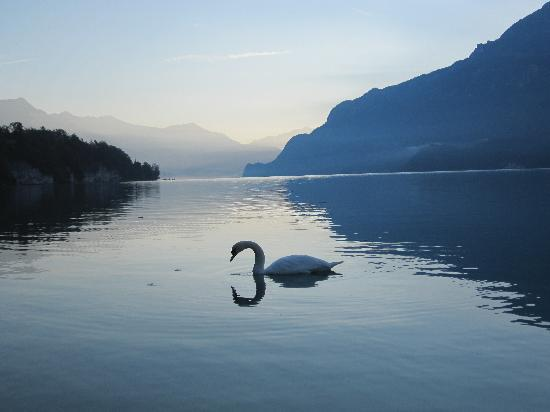 Hotel Seeburg: Morning with Swans