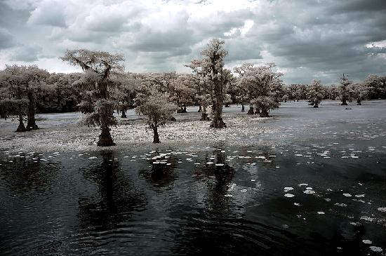 Uncertain, Teksas: Caddo Lake IR 1 - Go-Devil Tour