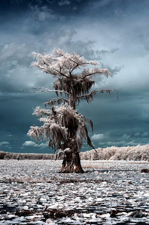 Uncertain, TX: Caddo Lake IR 2 - Go-Devil Tour