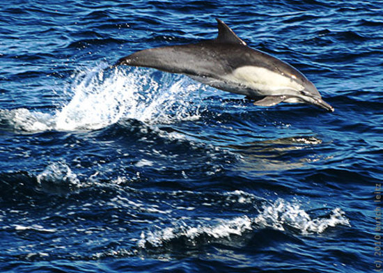 Capt. Dave's Dolphin & Whale Watching Safari: Here they come...