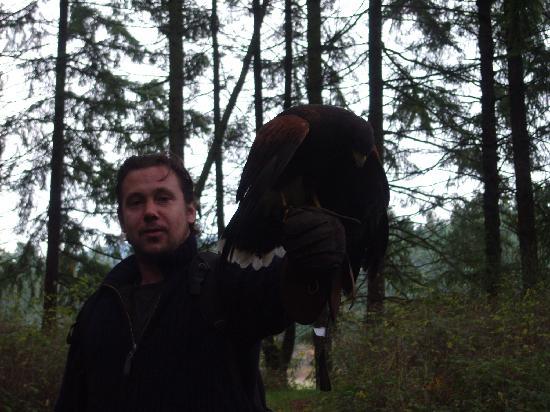The Raptors: during hawk walk