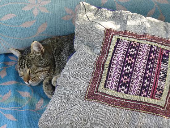 Goreme House: Very sweet hotel cat