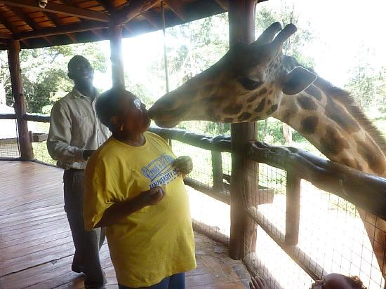 African Fund for Endangered Wildlife (Kenya) Ltd. - Giraffe Centre: A kiss from Daisy