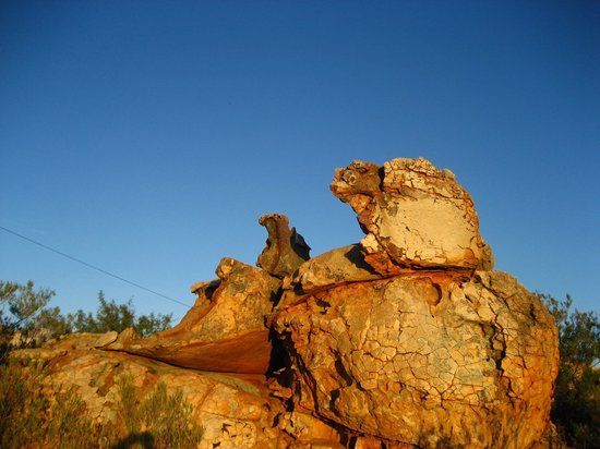 Kagga Kamma Private Game Reserve, Sydafrika: The Eagle Family