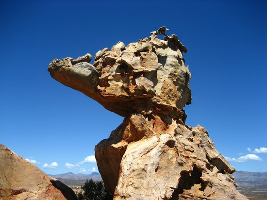Kagga Kamma Private Game Reserve, South Africa: Giant Lizzard's face