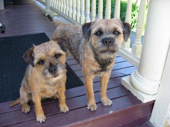 At the Turret Bed & Breakfast: 4-legged family members