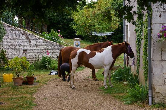 Domaine de Bourgville: horses welcome