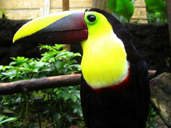Peace Lodge: Birds Exhibit