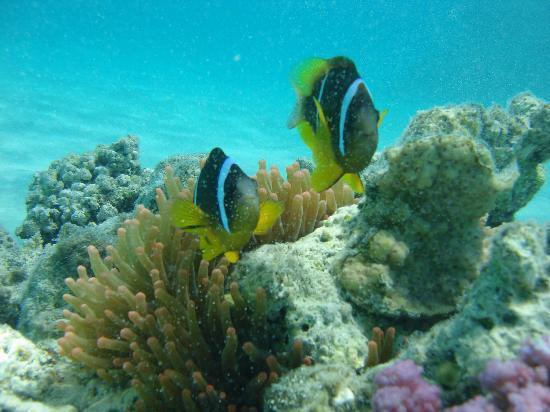 Mirage New Hawaii Resort and Spa: poisson clown niveau ponton de la plage