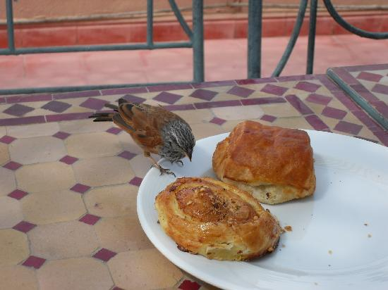 Riad Dar Dialkoum : petit déjeuner tout en haut du riad
