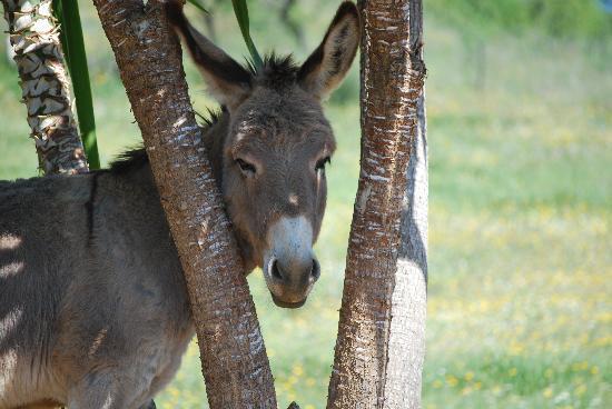 Casa El Algarrobo: Donkey Polleke