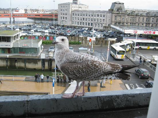 Hotel du Bassin : Sea Gull from the window