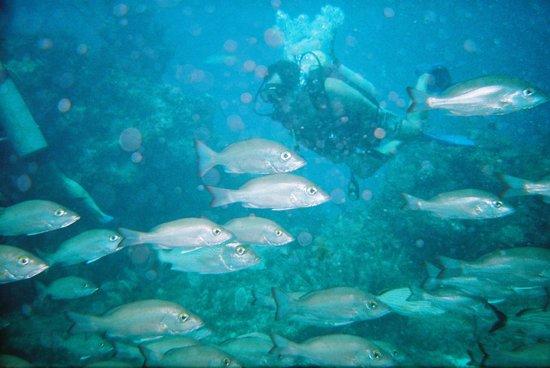 Colegio de buceo Cancun: another world