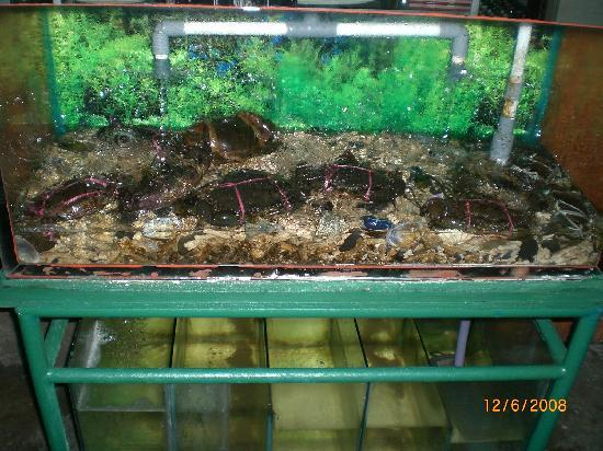 Green Garden Restaurant: Live crabs for you to pick