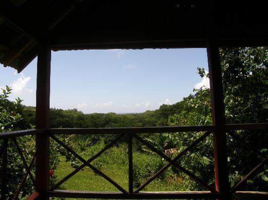 Kia Orana Bungalows: View from the verandah