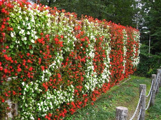 Hanamaki, Japão: バラ園内にて