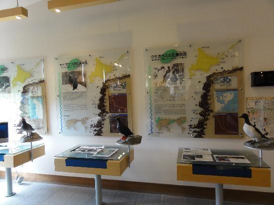 Hokkaido Seabird Center: 展示物