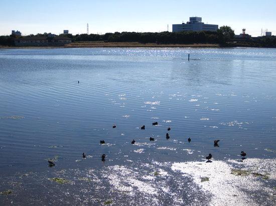 Yatsu Tidal Flats