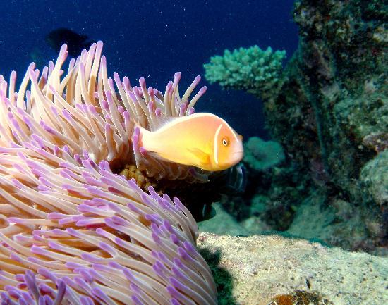 Divers Den : Hold Still Smile