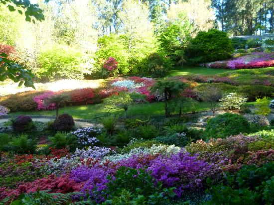 Olinda, ออสเตรเลีย: National Rhododendron Gardens - Nov 2010-2