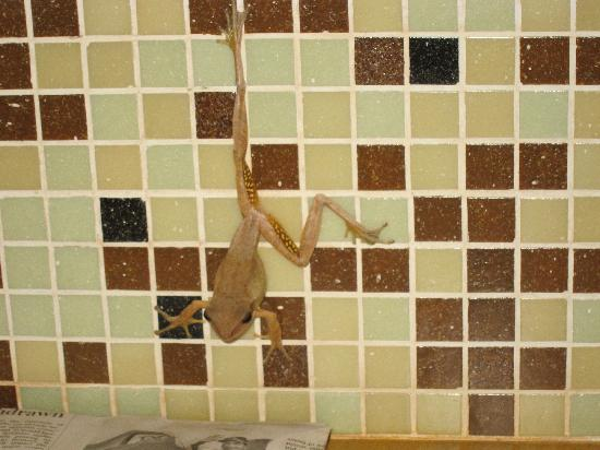SwaSwara: Our tree frog bath companion