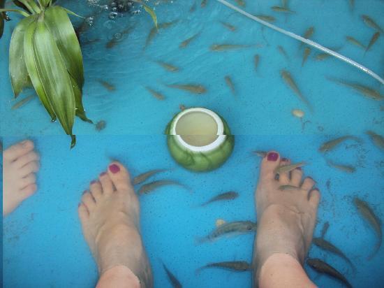 โกลเด้นท์ ทาเคียว เกสท์เฮ้าส์: Our massage fish; free of charge