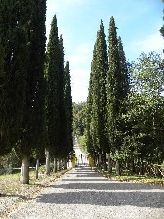 Borgo San Fedele: The long driveway