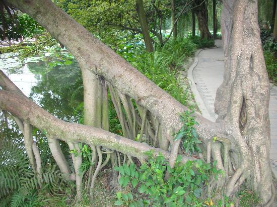 Tanghu Park: Tanghu Park-7