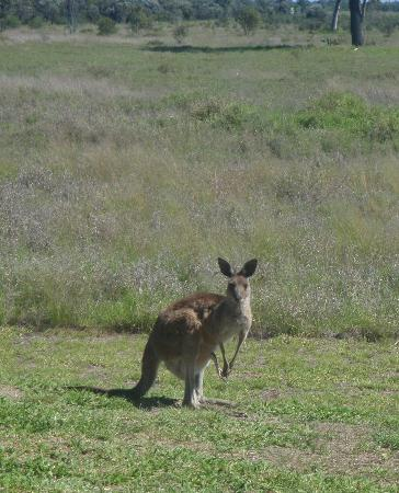 Emerald, Australia: Wildlife at the back window