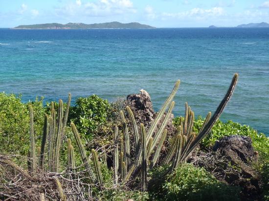 Palm Island Resort & Spa: An iguane enjoys the view