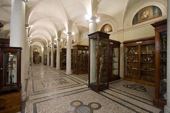 Museo di Anatomia Umana (Turín) - 2018 Qué saber antes de ir - Lo ...