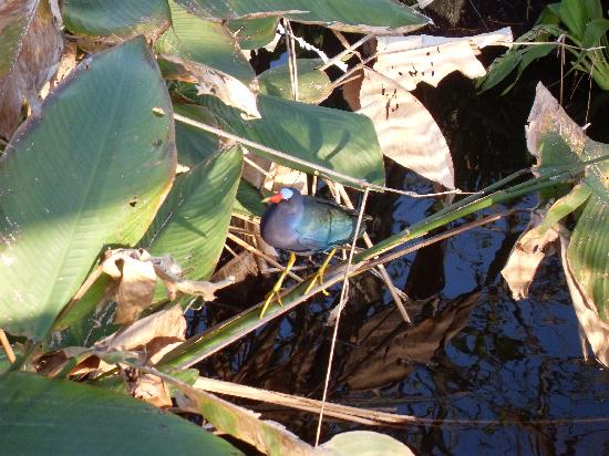 Wakodahatchee Wetlands: look at all the colors