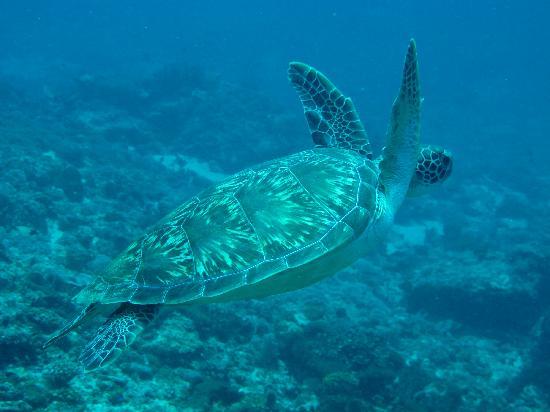 Senggigi, Indonesia: espèces sous-marines magiques...