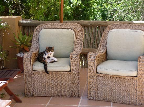 El Misti : cat relaxing on terrace