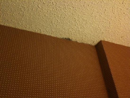 La Quinta Inn Austin Capitol: Mold in the room
