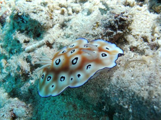 Gili Trawangan, Indonezja: nudibranch