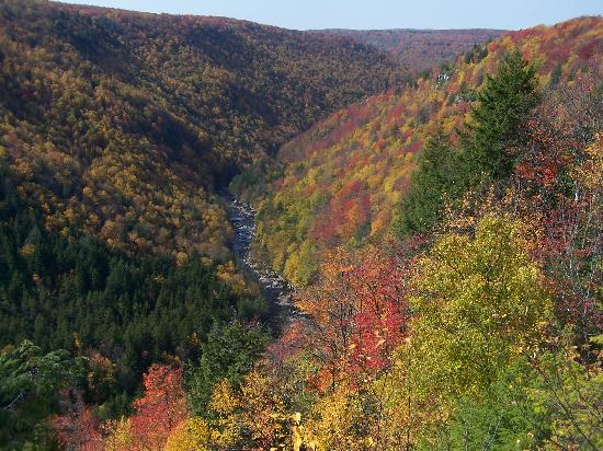 Blackwater Falls State Park Lodge: Fall foliage at Blackwater Falls State Park