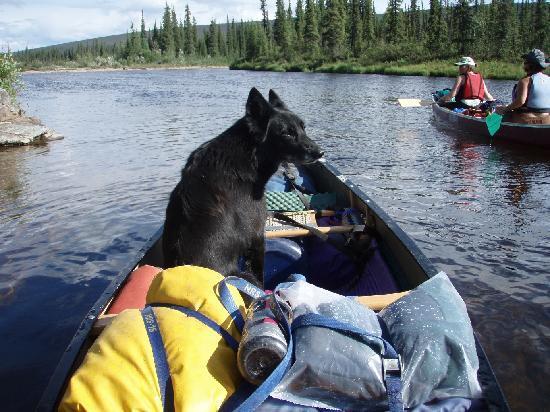 Fairbanks Paddle & Pedal: The Ninja Dog's a GOOD girl