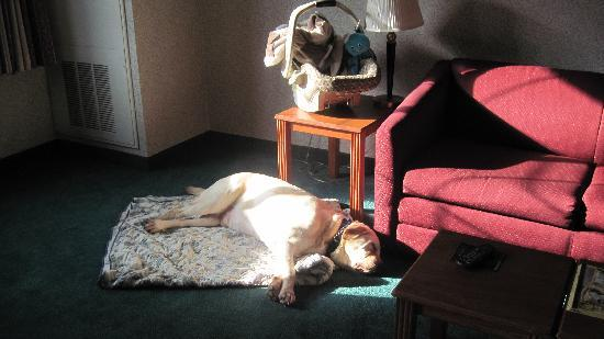 MainStay Suites of Lancaster County: Our dog