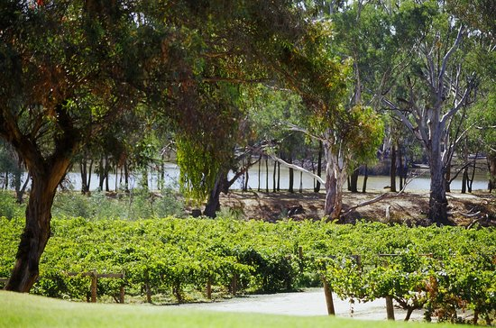 St Leonards Vineyard: Murray River at St Leonards